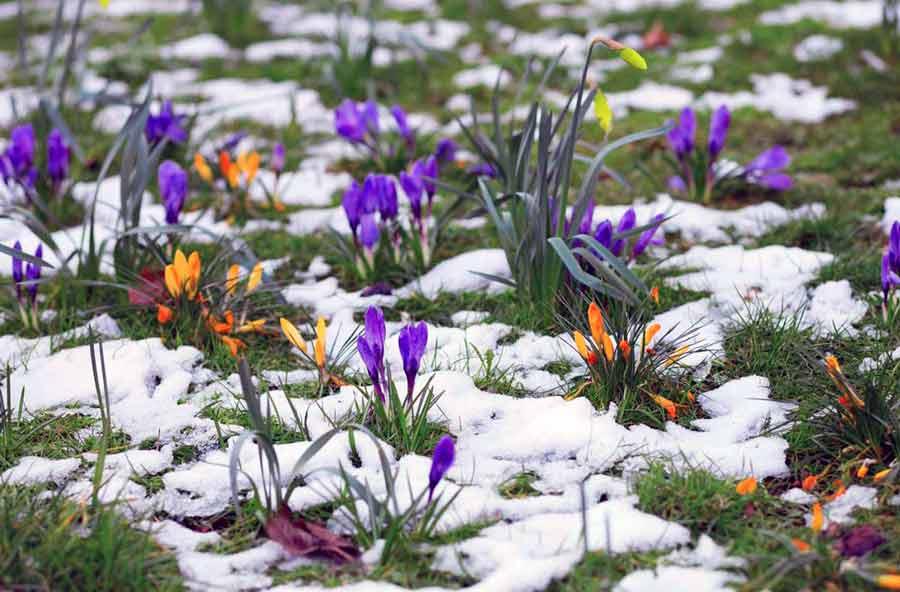 Цветы с названиями и фото