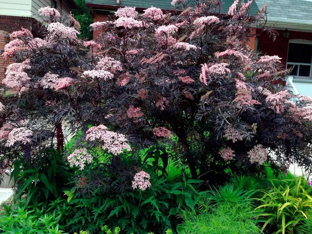 Многолетние деревья цветы фото