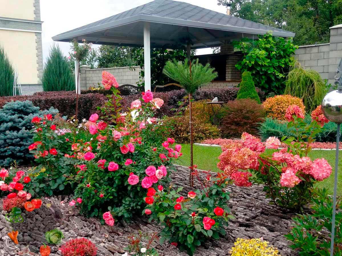 Розы на клумбе в сочетании с другими цветами фото