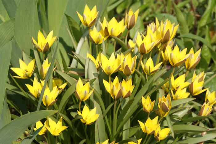 желтые цветы садовые многолетние фото и названия