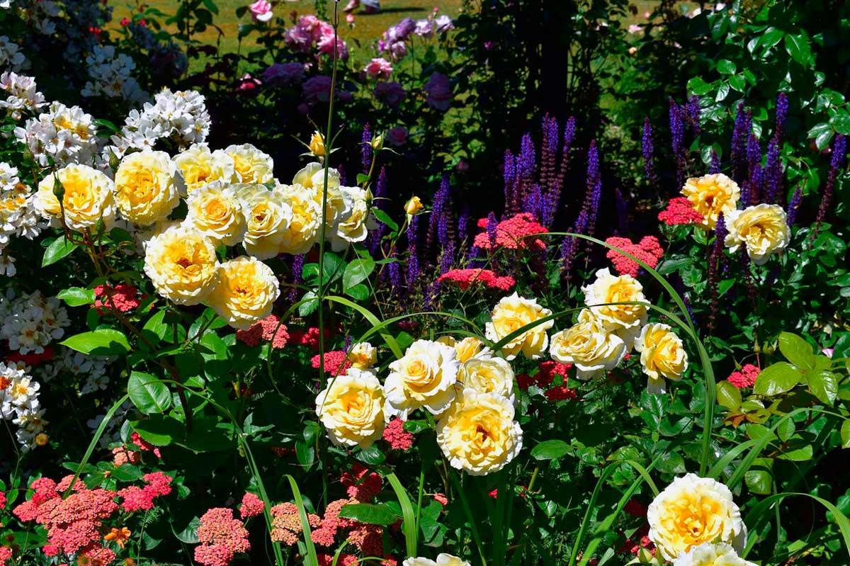 Картинка цветы красивые розы