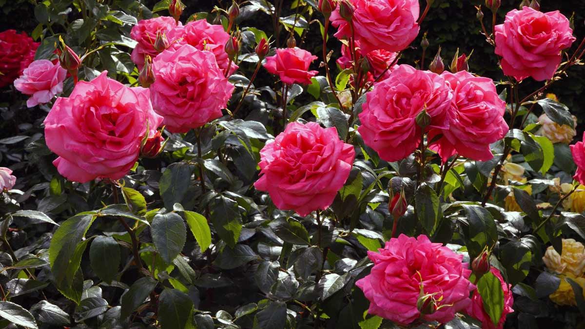 Красивые цветы виртуальные от