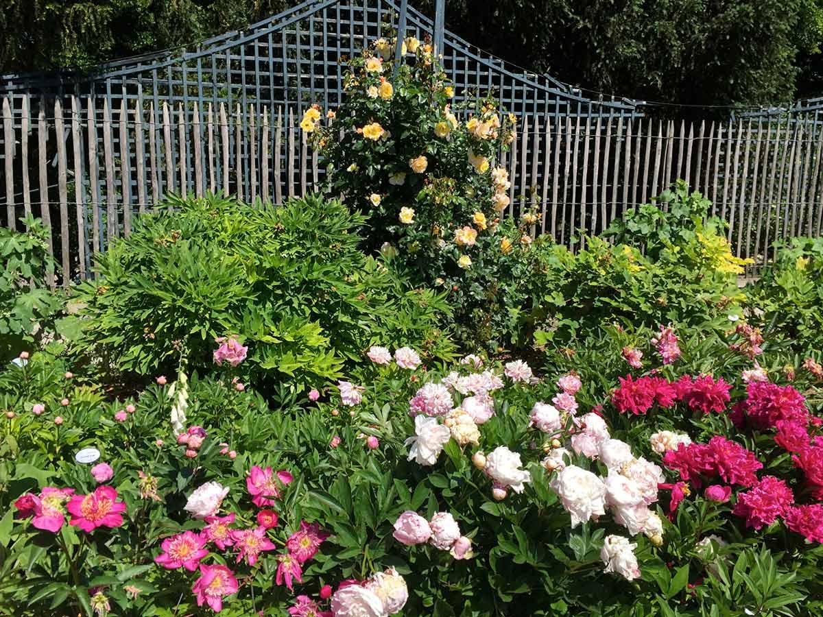 Красивые розы фото в саду