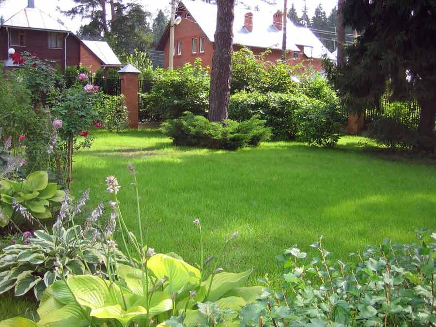 Лужайка перед домом своими руками 51