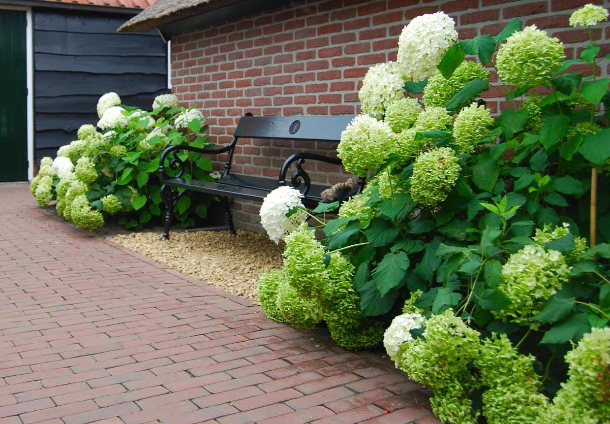 Гортензия на урале выращивание в домашних условиях 31