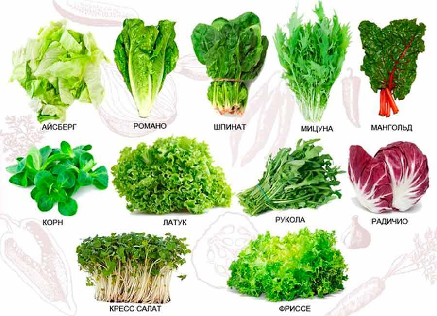 Салат капуста рецепты с фото простые и вкусные