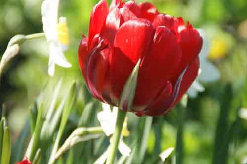 Многолетние цветы для сала