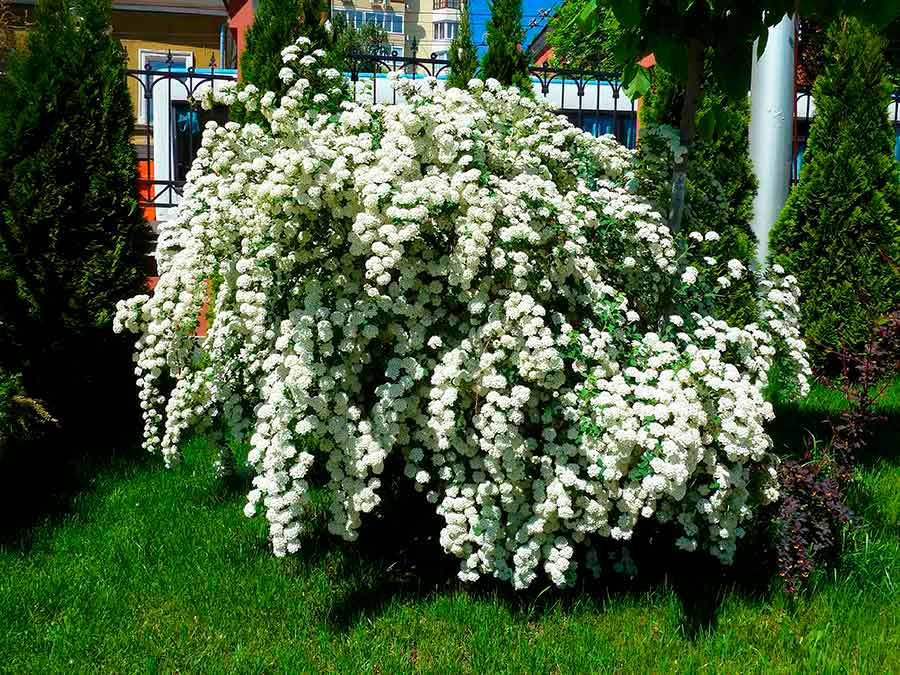Искусственные цветы оптом в СПб  купить по низким ценам