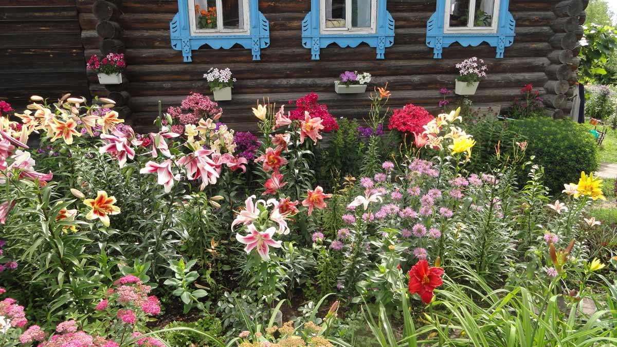 цветы в огороде в деревне