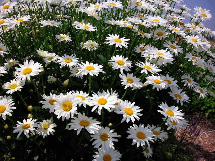 Садовый центр Цветущий сад