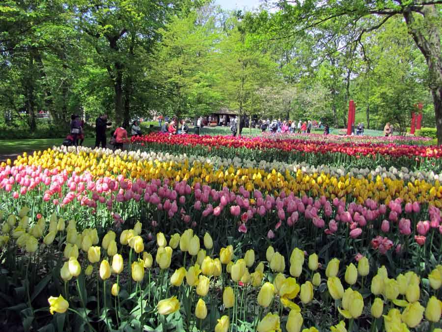 Хризантемы белые крупные фото