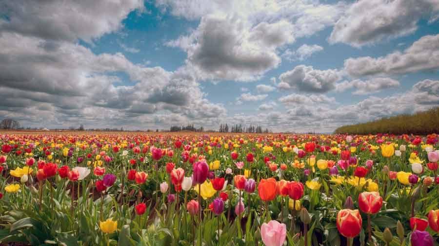Поля цветущих цветов
