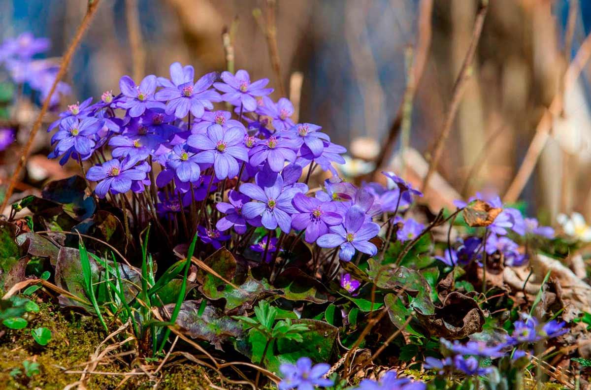 Синие цветы на 69