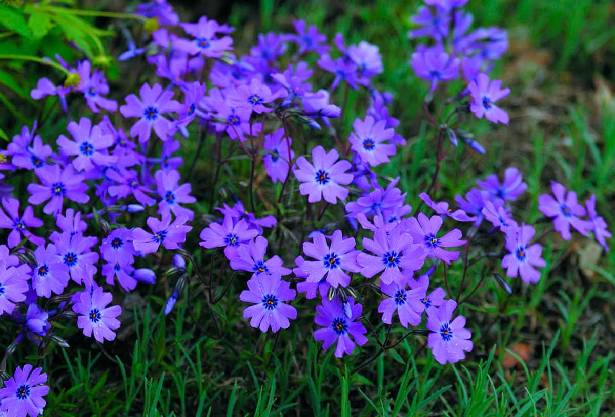 К чему снятся охапки цветов