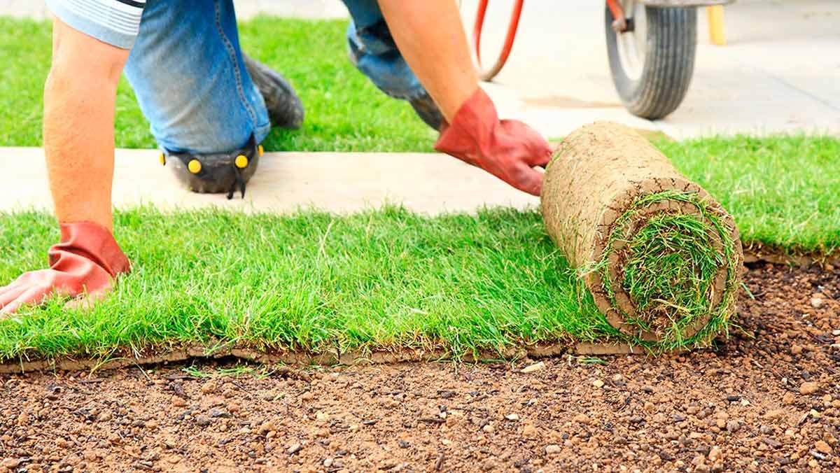 Посадка газона: пошаговая инструкция, фото