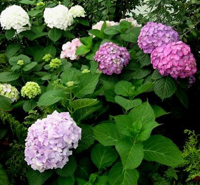 Доставка цветов в Алматы и Астане  заказать доставку