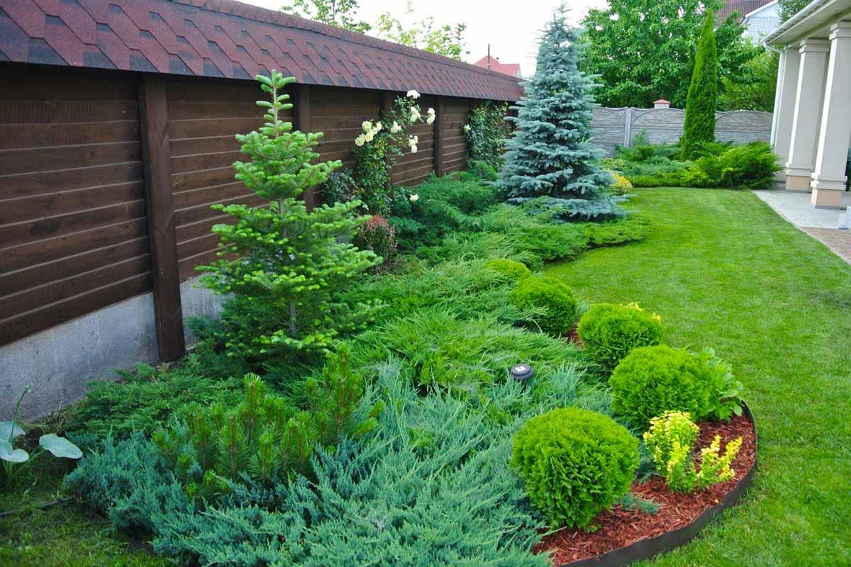 как ухаживать за хвойными растениями