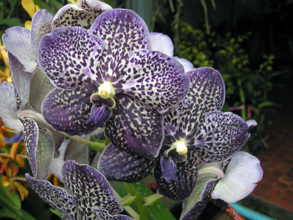 Vanda Gordon Dillon