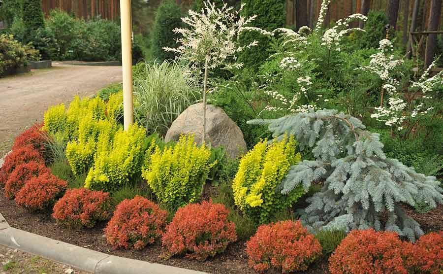 Бордюрные растения