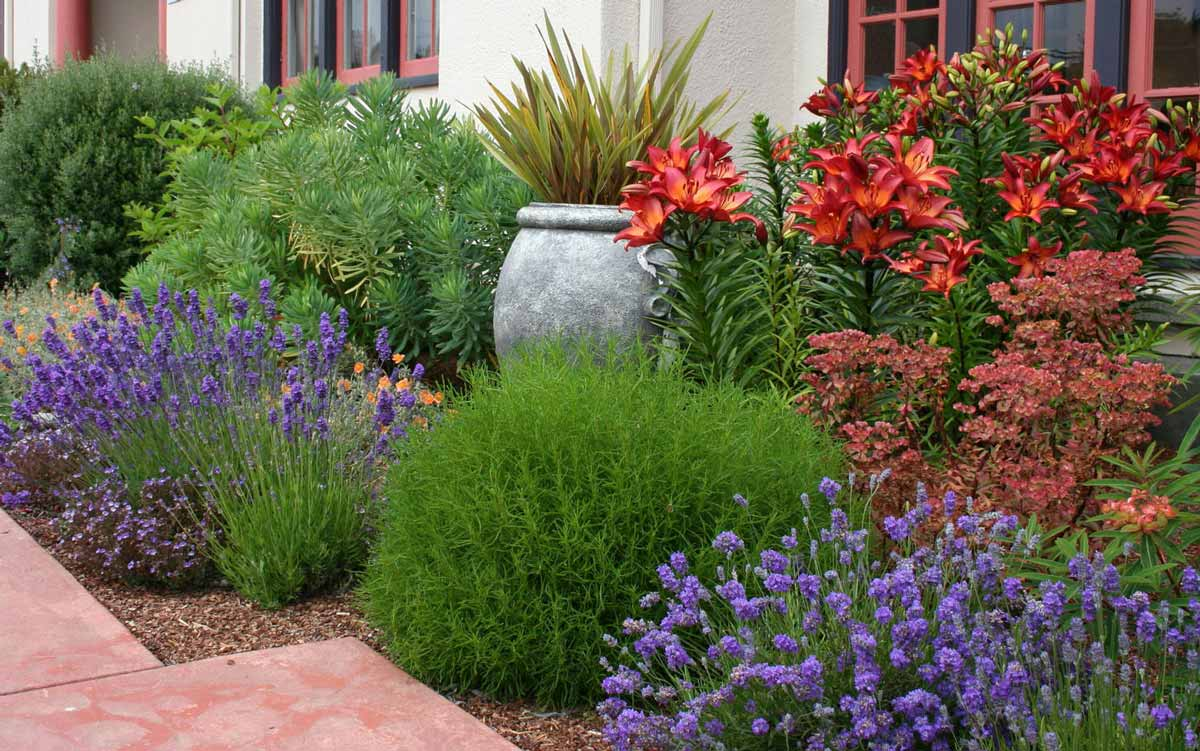 Растения на клумбу