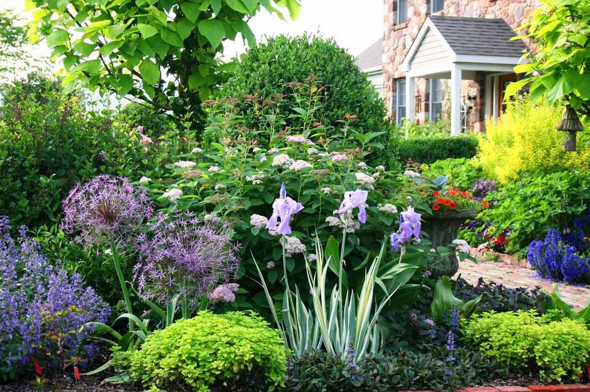 цветы для загородного дома названия и фото мастера любители