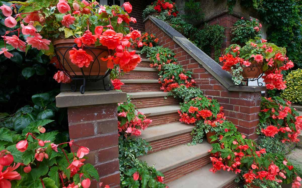 Цветы в горшках на ступеньках крыльца