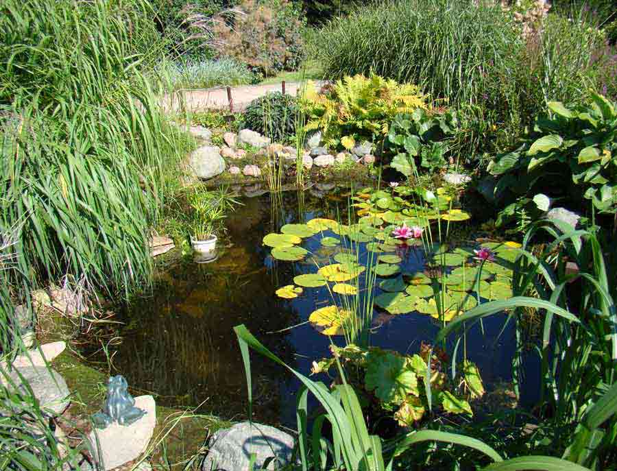 смелый растение для прудов фото и названия добавления желтого
