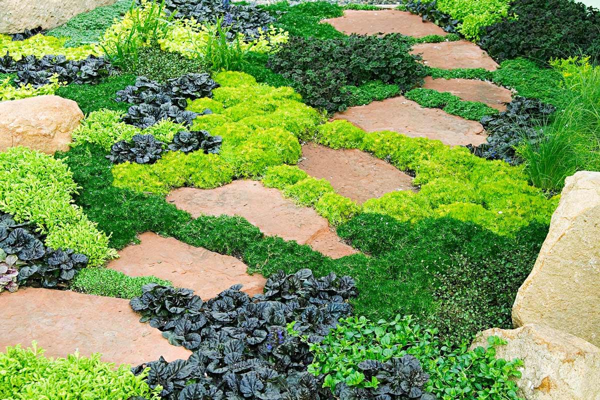 Низкорослые цветы для сада названия и фото