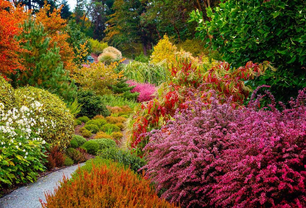барбарис в ландшафтном дизайне красивые фото розовой