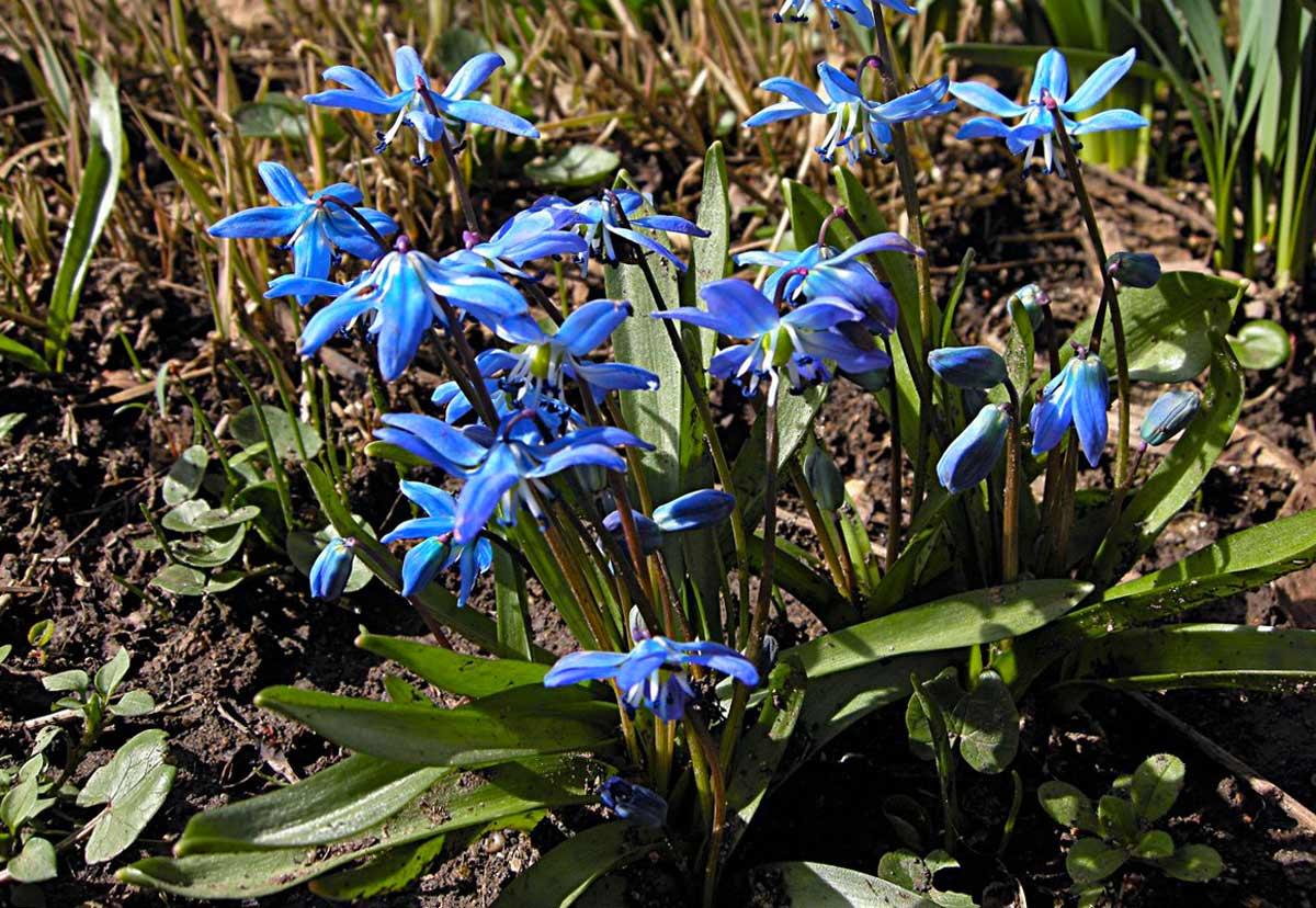 Ветки и одиночные цветы  florassu
