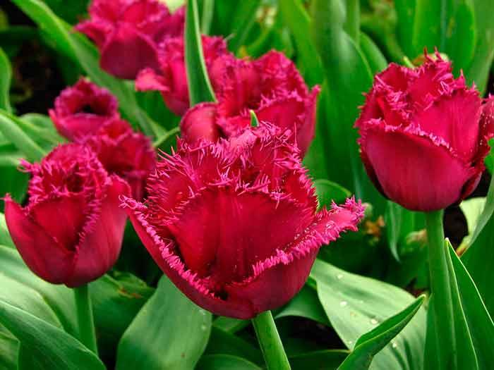 Розовый цветок в турции