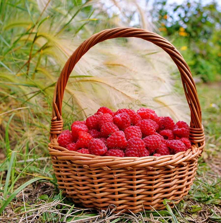 Список ягод – различных видов